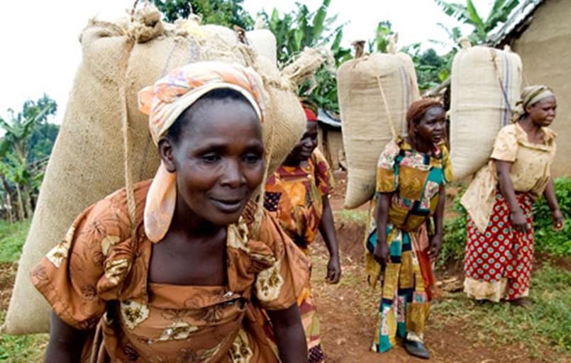 Africa Coffee Bureau, bridging the gap